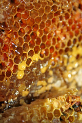 gold honeycells