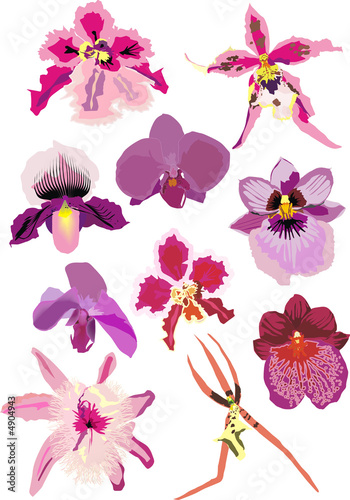 illustration with pink orchids