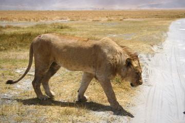 Tanzania, Wildlife, scenery, Pemba, Swahili, Safari, Serengeti