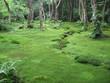 Japanishcer Garten
