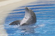 CLAPPING OF JOY DOLPHIN