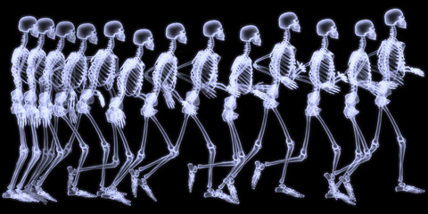 Human skelegon running, radigraphy sequence