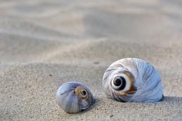 snail homes