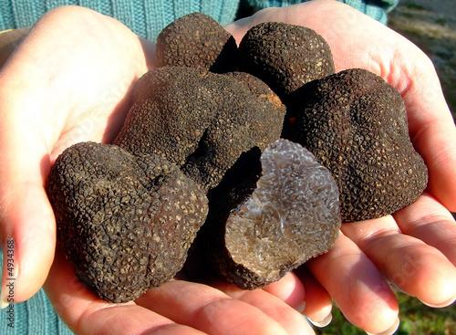 truffes 2 - 4934368