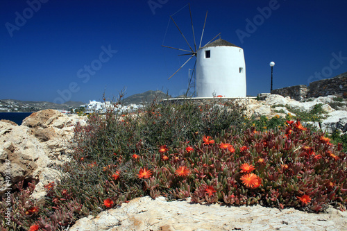 Windmill of Paros Island, Greece with wildflowers in the foregro