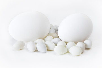 Eggs with White Background