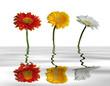 Leinwanddruck Bild miroir d'eau