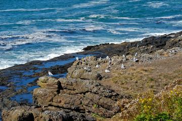 seagull coast