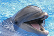 SMILING FACE OF A DOLPHIN