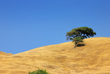 Lone tree on a hill over blue sky poster
