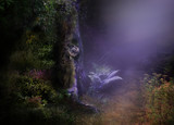 Fototapety Magical Night Forest Background