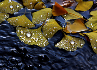 foglie gialle ricoperte di gocce d'acqua