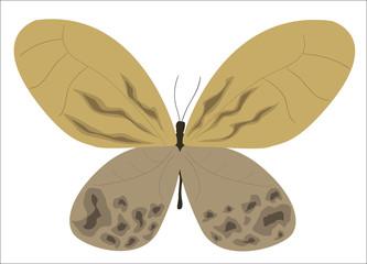 Mariposa en otoño