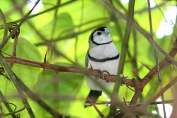 bird looking for predators