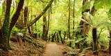 Rainforest Panorama poster