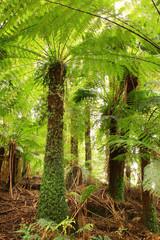Treefern Canopy
