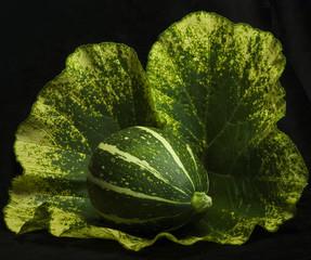 Green pumpkin on a leaf