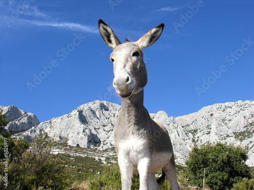 Fotobehang Ezel Ane en Provence