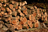 chopped trees ready to be used as firewood poster