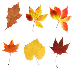 composite photo of various autumn leaves