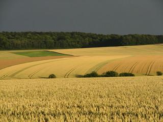 Campagne agricole sous un soleil doré