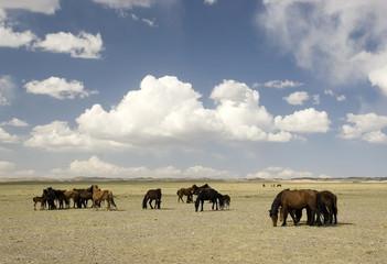 horses in Gobi desert