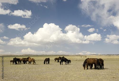 horses in Gobi desert © Midkhat Izmaylov