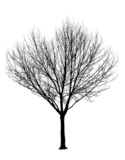 Bare Tree Silhouette Isolation poster