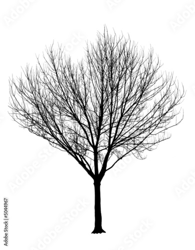 tree silhouette pictures. Bare Tree Silhouette Isolation