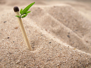 Match with green leaf on background with sand