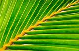 vivid palm leaf poster