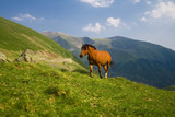 Horse on mountain pasture. poster