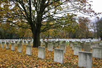 A military graveyard from the World War II period