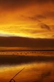 Wetlands Sunrise poster