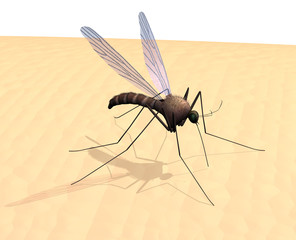 Mosquito on Skin -3D render