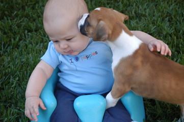 puppy baby 9