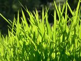 Emerald grass poster