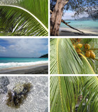 Tropical installation. Seychelles poster