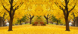 Fototapety yellow maple leaves landscapes
