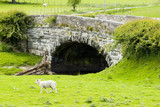 Welsh Bridge with Sheep poster
