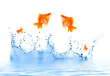 Goldfish is jumping