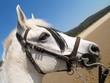caballo blanco al sol