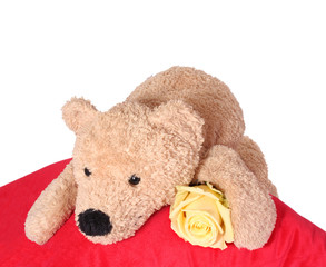 Bear on red pillow