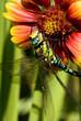Libelle und Blüte