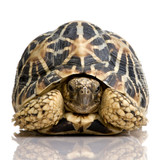 Fototapete Konzept - Endangered species - Reptilien / Amphibien