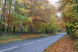 road in Autumn or fall season poster