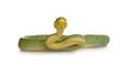 Emerald Tree Boa - Corallus caninus