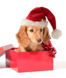 Santa pup poster