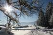 Beautiful Winter