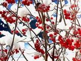 Fototapeta krzew - krzewów - Drzewo